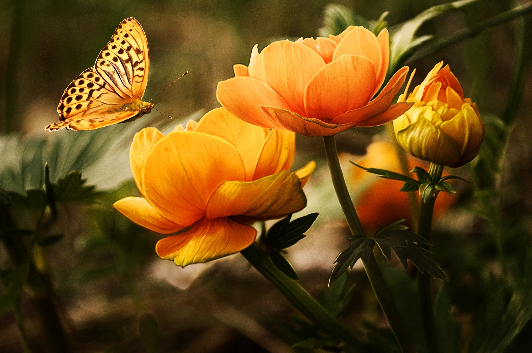 butterfly and yellow flowers